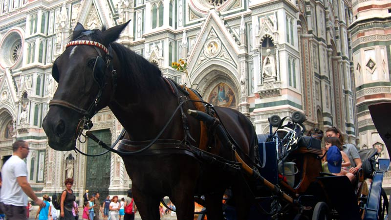 Horse with carriage at the Duomo - Santa Maria del Fiore, Florence